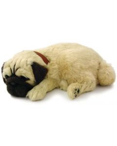 Small Image for PERFECT PETZZZ~PUG