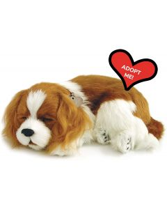 Small Image for PERFECT PETZZZ~CAVALIER KING C
