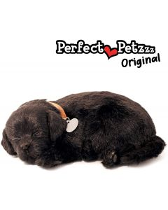Small Image for PERFECT PETZZZ~BLACK  LAB