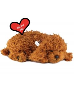 Small Image for PERFECT PETZZZ~TOY POODLE