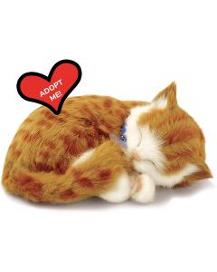 Small Image for PERFECT PETZZZ~ORANGE TABBY CA