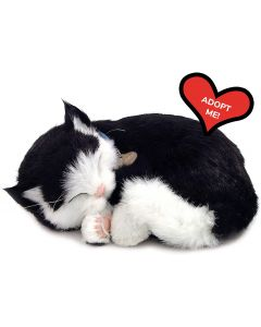 Small Image for PERFECT PETZZZ~BLACK & WHITE C